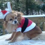 Foofye Santa